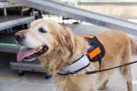 service animal, inclusion, accessibility