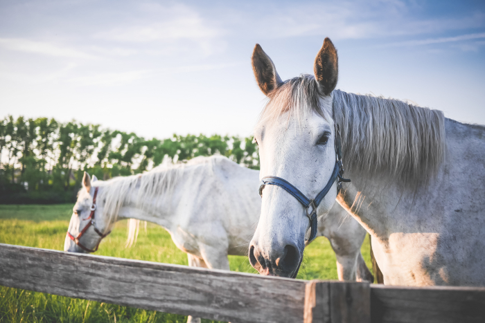 horse therapy, hippotherapy, cerebral palsy